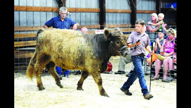 Drew Seifert, of the Chippewa 4-H Club, participates in last year's Livestock Show at the Pepin County Fair. The 140th Pepin County Fair is scheduled for Friday, July 21, through Sunday, July 23. Laura Berndt file photo